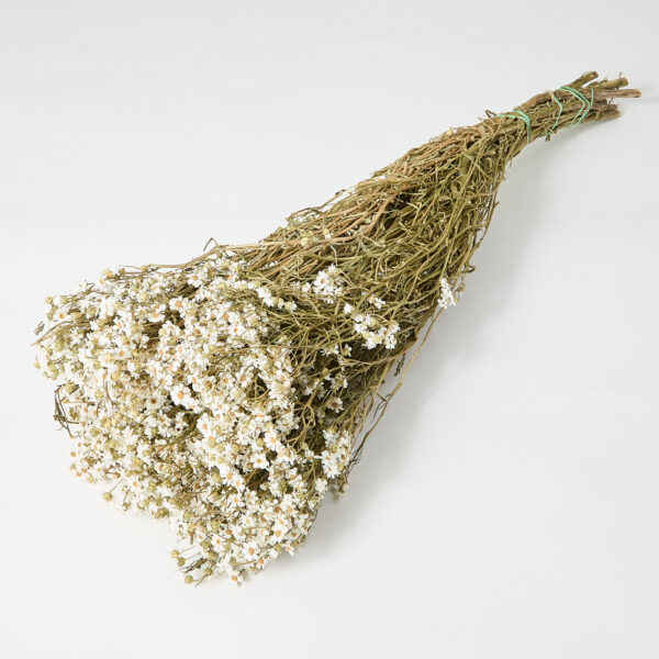 Dried Ixodia Flowers in natural white colour, in a bunch of 10 stems. that are 60cm in length.