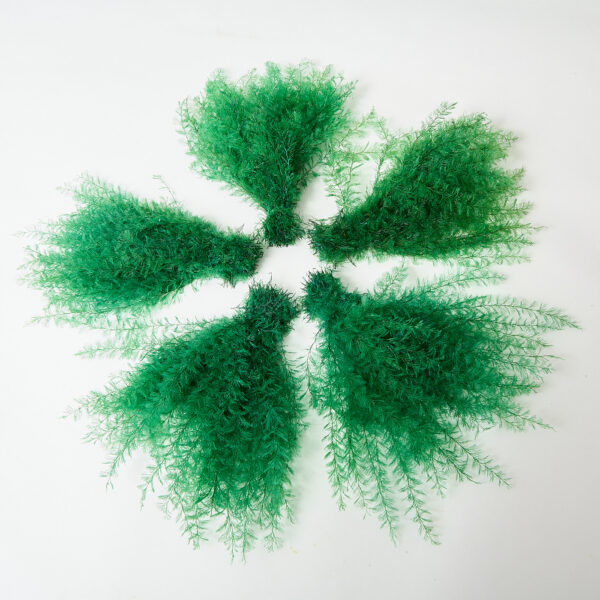 This is a green air fern that has been fanned out in a circle to show five fronds.