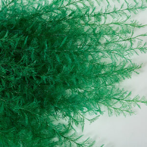 This show a green air fern in detail so the individual fronds and frond detail are clearly visible.
