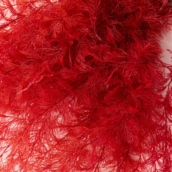 This a detailed image of a red air fern, showing the fronds close up.