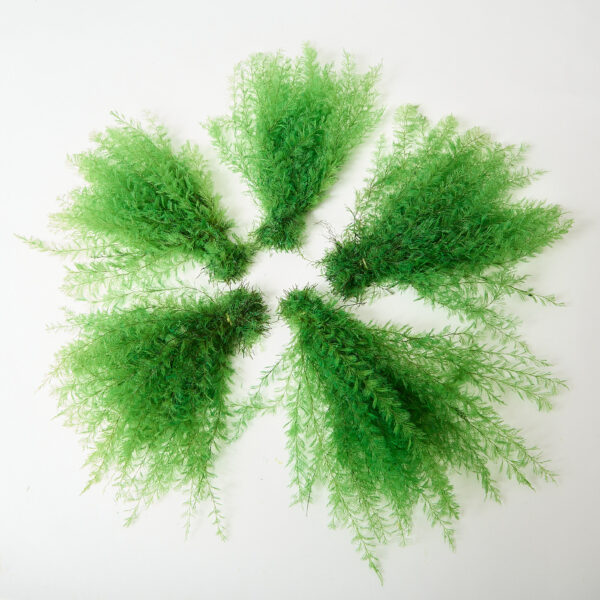 This is a spring green coloured air fern that has been fanned out to show its five fronds.
