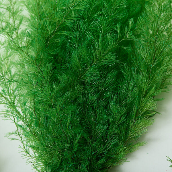 This is a close up image of an air fern, showing the fronds in detail. It is spring green in colour.