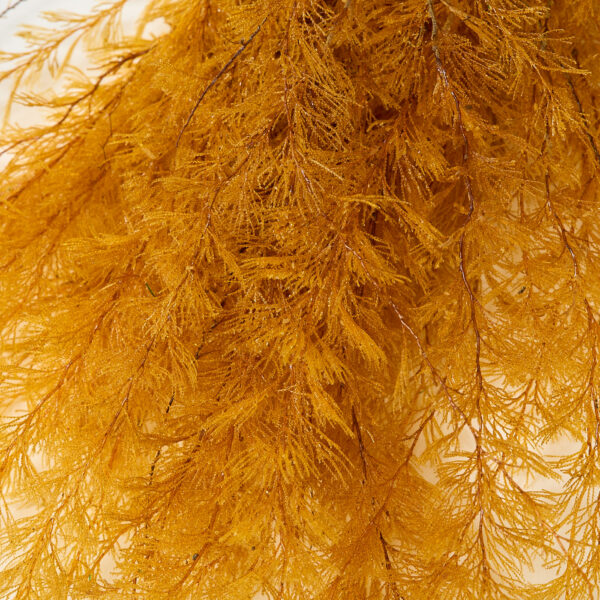 This a close up image of a golden yellow air fern, showing the detail of the fronds.