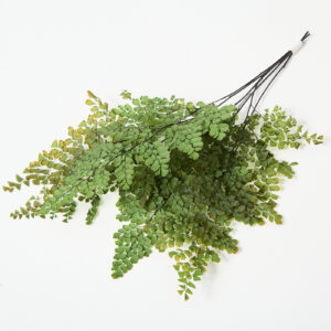 This is a Adianthum Fern in a green colour, laid out so you can see the delicate fronds that fan out into spear shapes.
