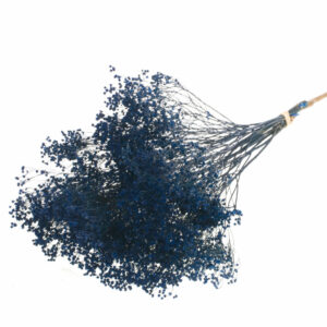 Dried Broom Bloom, Dark Blue