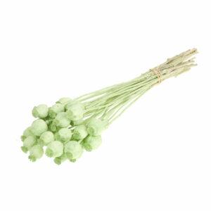 Dried Papaver (Poppy heads) Light Green Misty