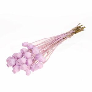 Poppy Lilac Misty