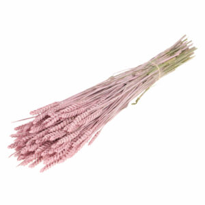 Dried Wheat Pink Misty