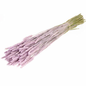 Dried Wheat Lilac Misty