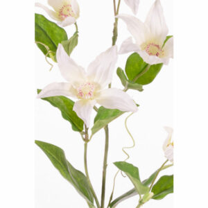 Clematis Spray, cream