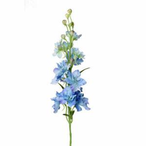 Delphinium, blue