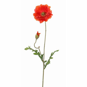 Papaver, dark orange