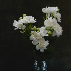 Faux Jasmine Spray, White