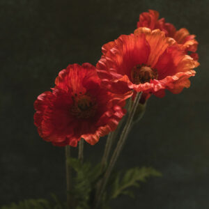 Faux Papaver, (Poppy) Dark Orange