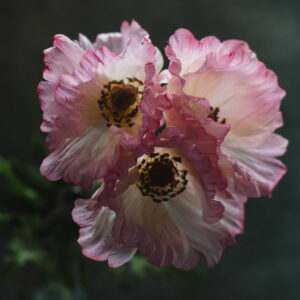 Faux Papaver, (Poppy) Pink