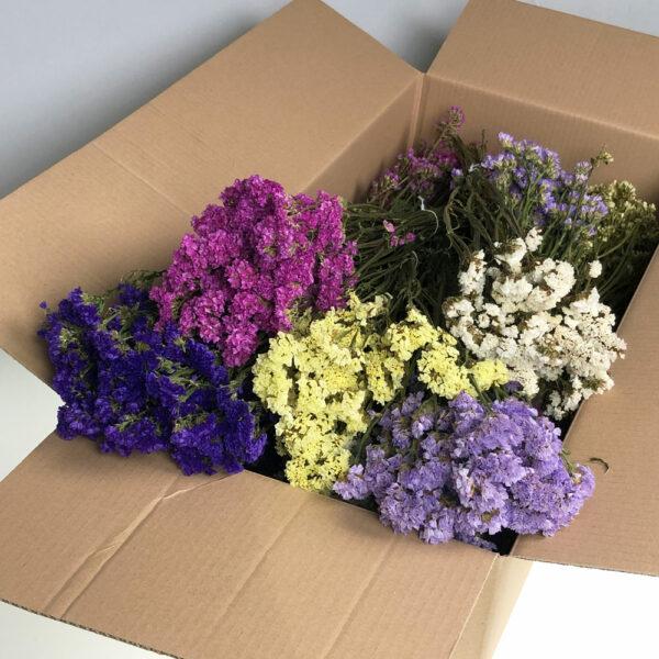 Florist Mixed, Statice