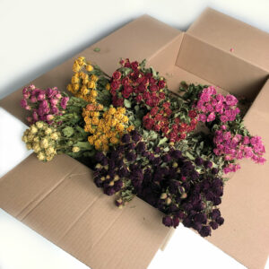 Florist Mixed Flower Dried Box – Spray Roses