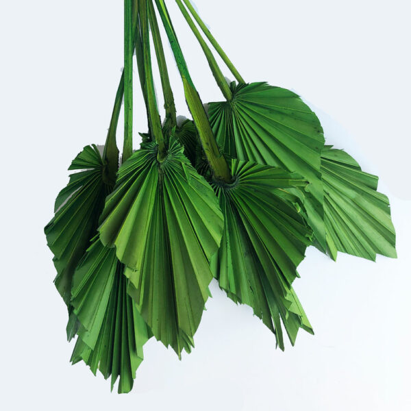 Dried Palm Spear, Green Bunch