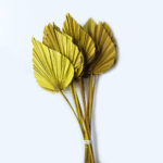 Dried Palm Spear, Yellow, Bunch