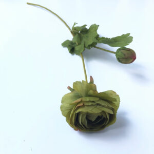 Ranunculus green