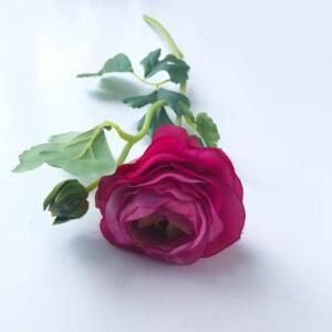 Ranunculus pale pink