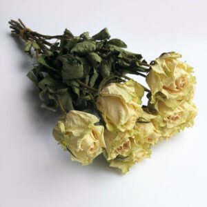 dried-roses-natural-cream-bunch