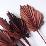 Dried Palm Spear, Brown Bunch