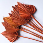 Dried Palm Spear, Orange Bunch