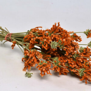 Dried Leonotis, Orange Bunch