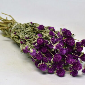 Dried Gomphrena, purple, bunch