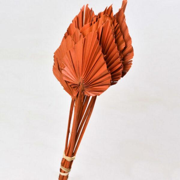 Dried Palm Spear, Orange Bunch