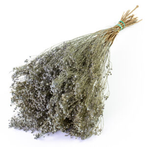 This image shows a close up of dried broom bloom in a misty grey colour, laid on a white background.