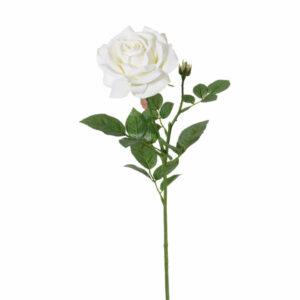 Rose, fleurie, white