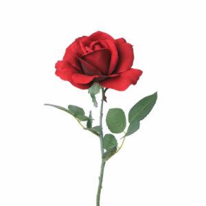 Rose Carol, red