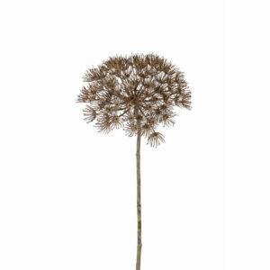 Allium spray