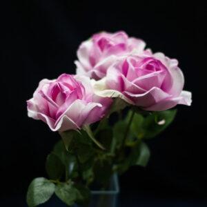 Faux Rose Carol, Pink