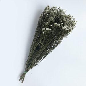 Dried Ixodia, Super Grade, Natural White, 60cm, 5 stem bunch