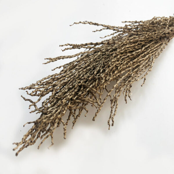 Dried Palm Twizzles, Natural