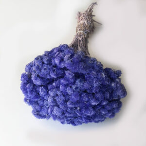 Dried Immortelle, Lavender, Bunches