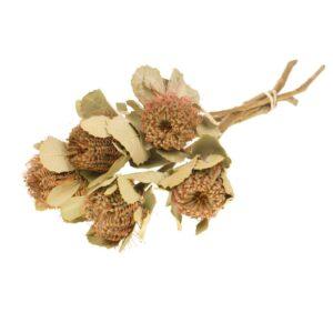 Dried Banksia coccinea, natural