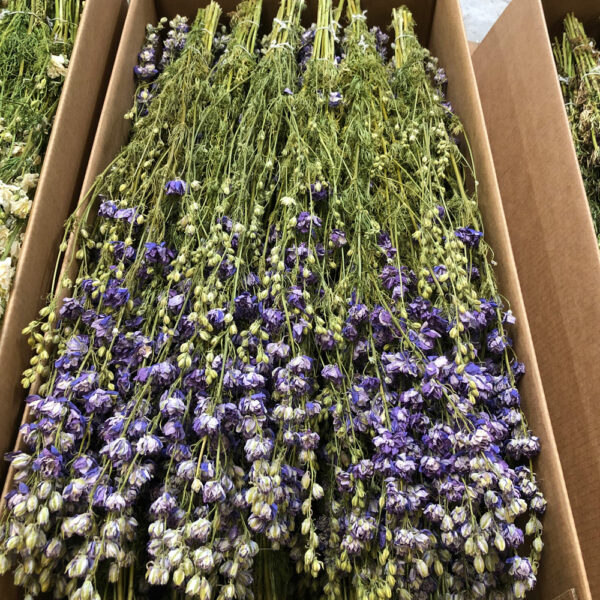 Dried Delphinium Natural Lilac