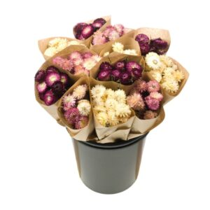 Dried Flower Straight Line Bunches, Mix 12