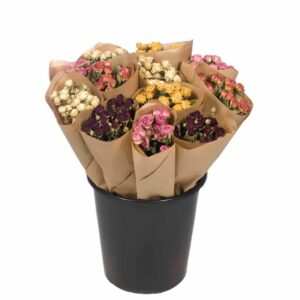 Dried Flower Straight Line Bunches, Mix 21