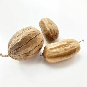 Jhinga, 8-10cm, Natural
