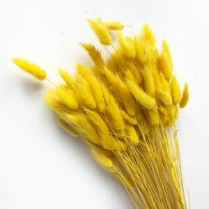 Dried Lagurus Yellow