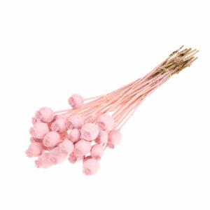 Dried Papaver (Poppy heads) Pink Misty