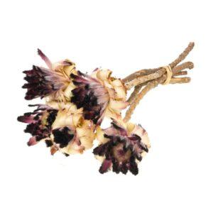 Protea nerifolia, natural