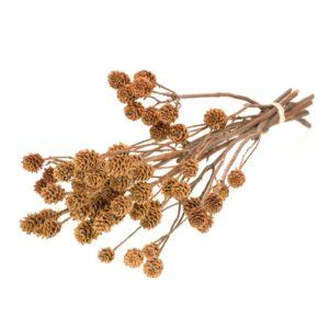 Salignum, natural