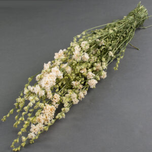 This image shows a bunch of dried, white delphiniums, laid on a grey background