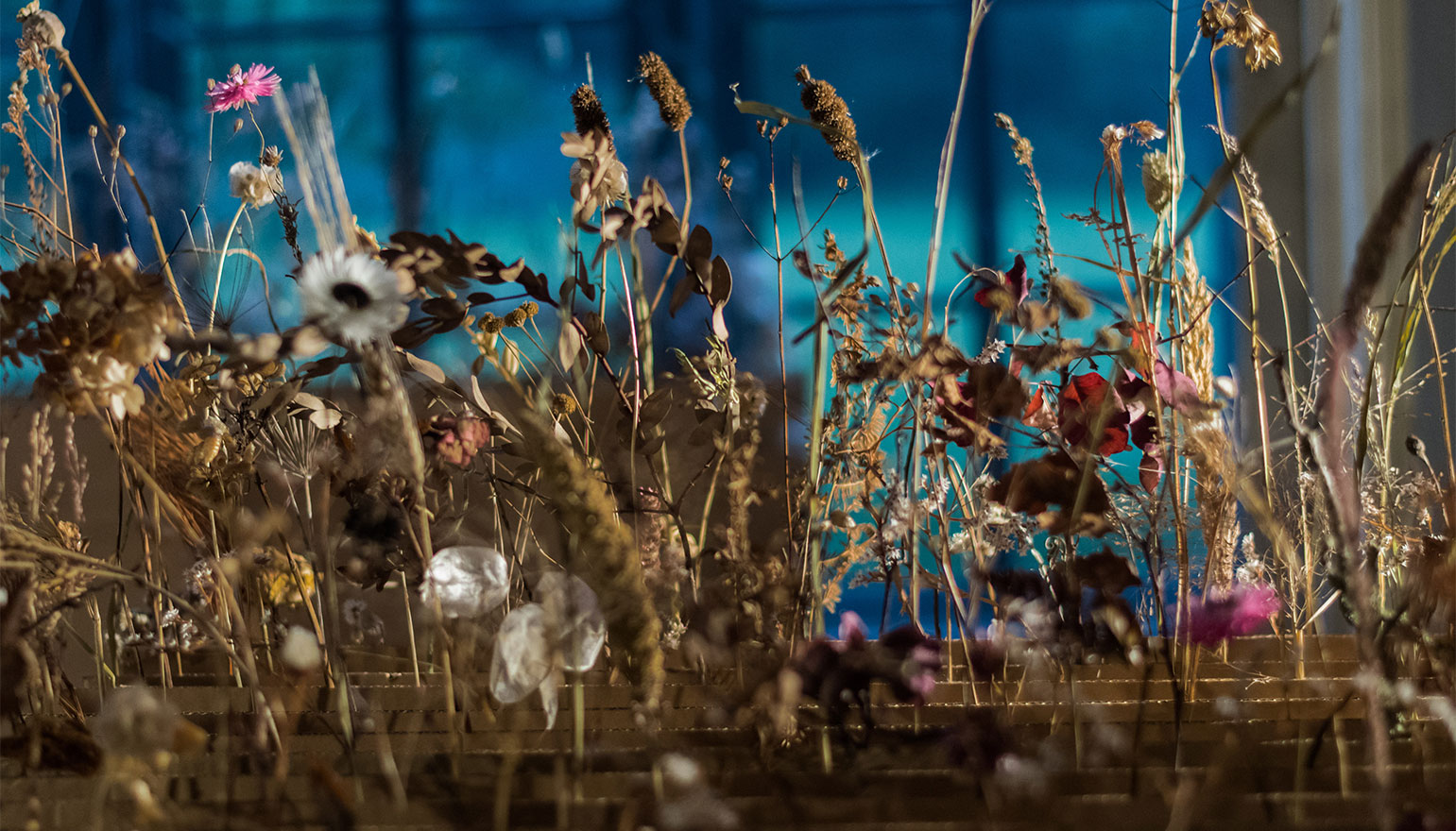 close up of display of dried flowers